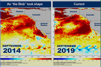 graphic showing heating increase of pacific ocean. NOAA