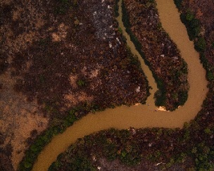 An aerial view showing some of the fire damage in Brazil's Pantanal. Source - Phys.org