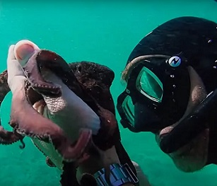 The diver, Craig Foster, has a special relationship with the female octopus. Credit - IMDb