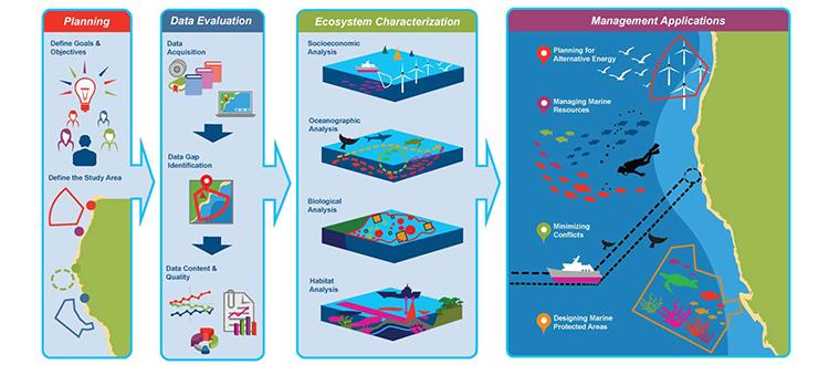 marine ecosystem essay