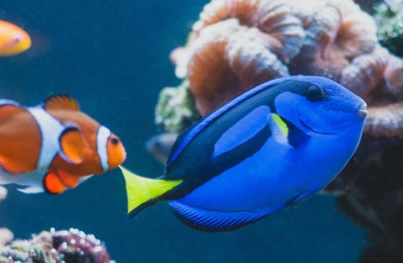 Reef fish of Palau. credit - 123rf