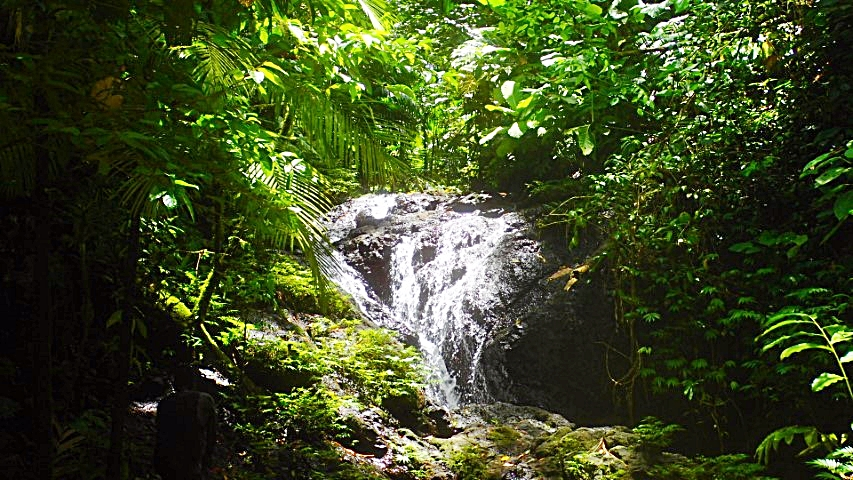 Sirebe Rainforest Conservation Area