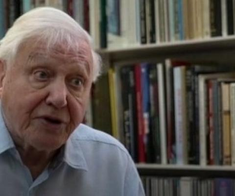 David Attenborough says the moment of crisis has come. (ABC News)