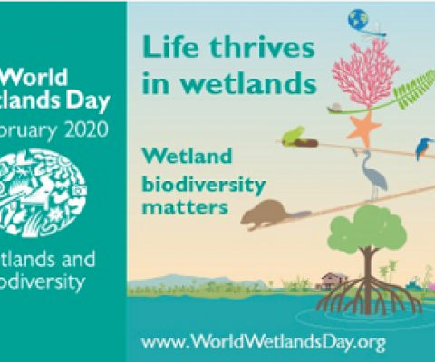 World Wetlands Day promotional flyer. source - www.ramsar.org