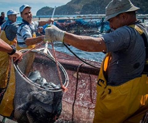 Boost for fish farms as ocean fish stocks affected by climate change.Credit: Fadel Senna/AFP/Getty