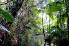 The Wet Tropics Management Authority warns climate change is likely to result in 'substantial ecological change' in north Queensland. Photograph: Maria Grazia Casella/Alamy Stock Photo