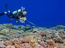 A scientific scuba diver records fish along a transect line. Global Reef Expedition, Tonga 2013. Photo by Ken Marks.