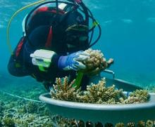 Underwater Arks Can Help Preserve the World's Vital Coral Reefs. Credit - https://www.mars.com/