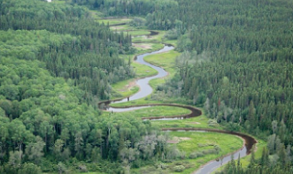 The Broadback Watershed contains some of the last old-growth boreal forest in the Waswanipi Cree territory.(Josué Bertolino/© Josué Bertolino / Greenpeace)