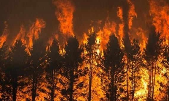 The Dunn's Road fire burns pine trees near Maragle, New South Wales, on 10 January. Credit: Matthew Abbott/New York Times/Redux/eyevine