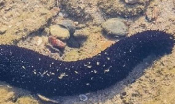 sea cucumber. Photo: 123RF